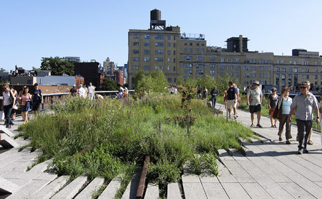 Image for The High Line